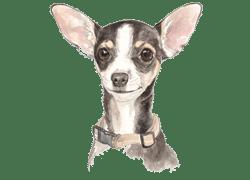 H.E.L.P. – Home for Every Living Pet